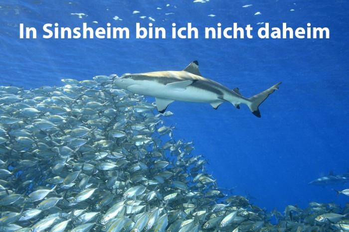 oc_sinsheim_website-seitenbild_900x600_1